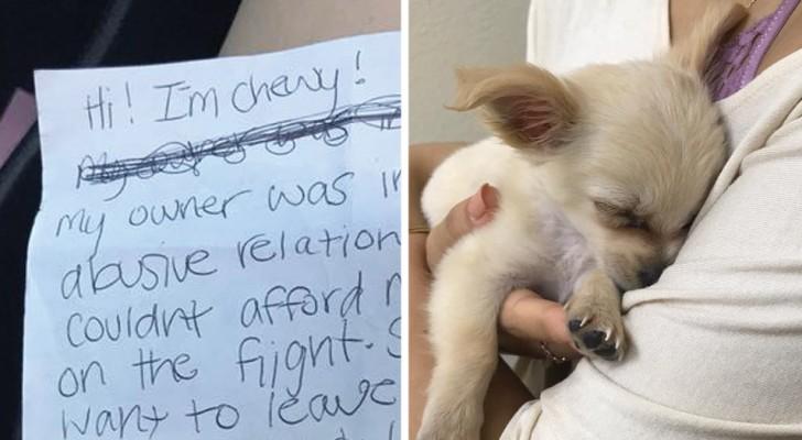 Au găsit un căţeluş abandonat în aeroport şi lângă el o scrisoare. De ce a fost abandonat acest pui de căţel este dureros.