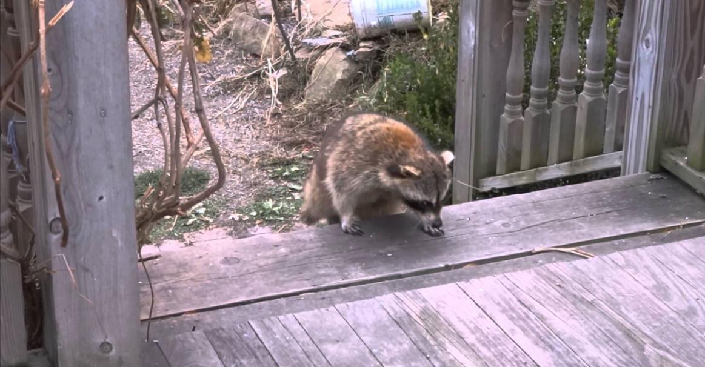 I-au dat de mâncare în fiecare zi, iar apoi au aflat că este orb. Într-o zi a venit în curtea lor cu încă doi prieteni şi atunci au văzut ce înseamnă iubirea între animale.