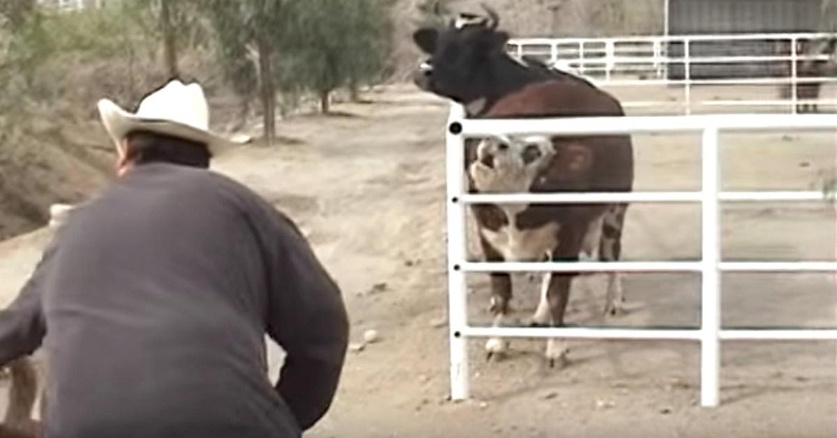 Plângea de tristeţe după puiul ei, dar atunci când se uită atent după gard îşi pierde imediat controlul. Imagini emoţionante!